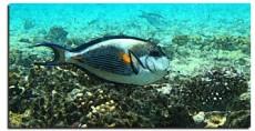 + DETALHES DA OBRA Coral e Peixe Afresco
