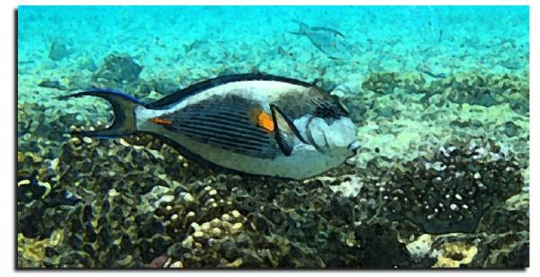 CLIQUE PARA AMPLIAR A OBRA Coral e Peixe Afresco